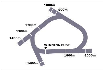 Taree Race Course